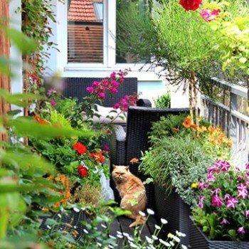 Balkon Çiçekçiliği