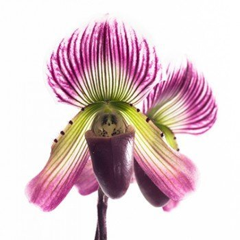 Orkide Yetiştirmek