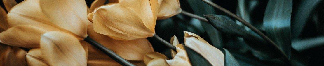 Canlı Çiçeklerle Masa Aranjmanı